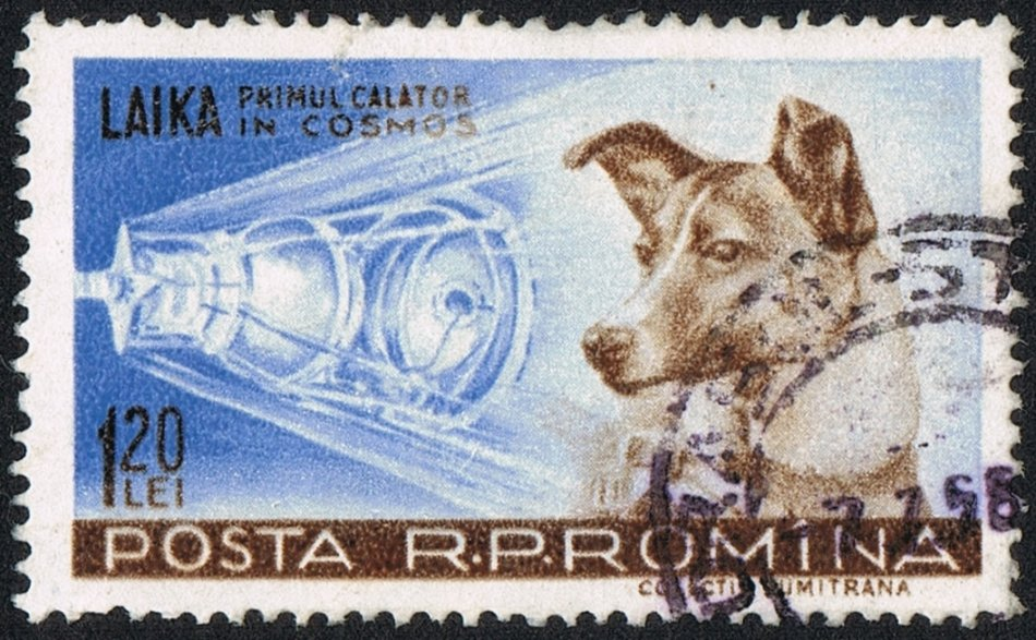 Собака Лайка на почтовой марке Румынии фото