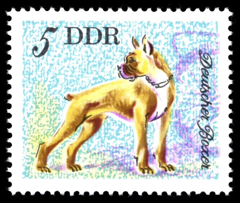 Немецкий боксер собака на почтовой марке Германии фото