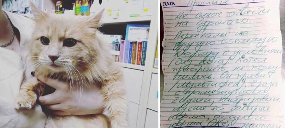 кот, домашний любимец, кот с запиской, рыжий кот