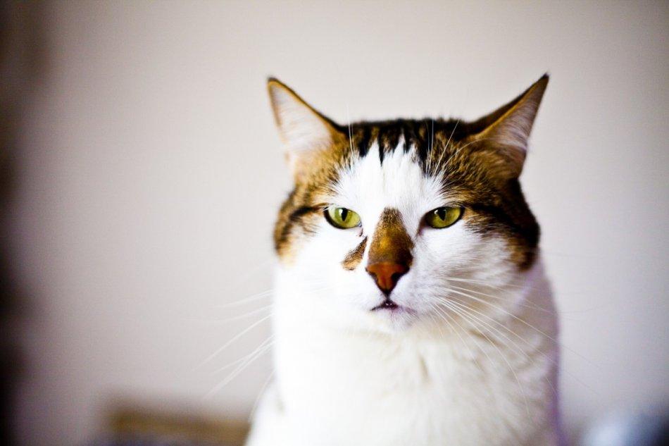 Кошка беспокоится фото