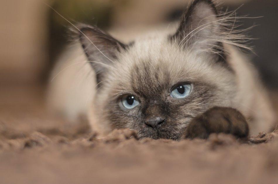 Кошка прячется фото