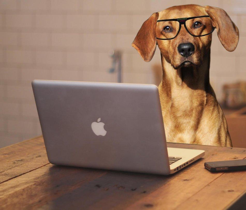 Собака в очках использует ноутбук фото