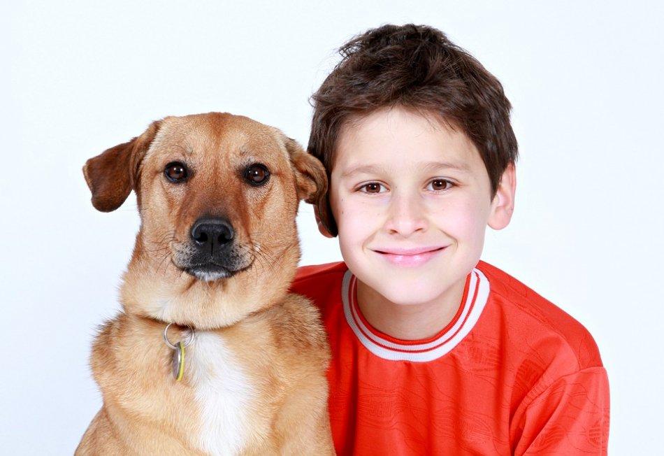 Рыжая собака и мальчик фото