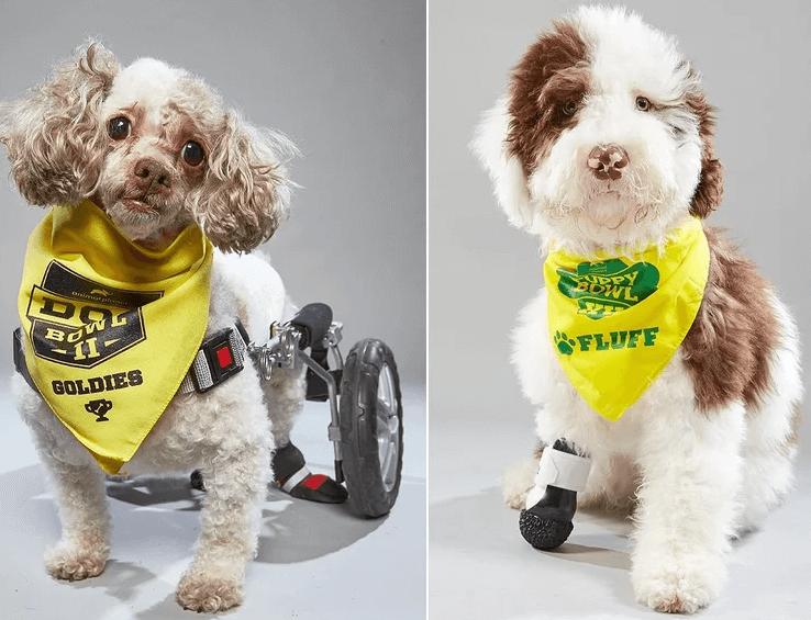собаки, собаки с ограниченными возможностями, домашние питомцы