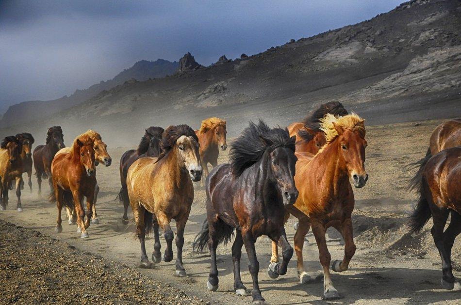 Табун лошадей бежит на камеру фото