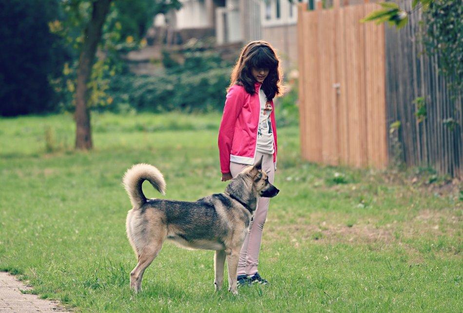 Девочка выгуливает собаку дворняжку фото