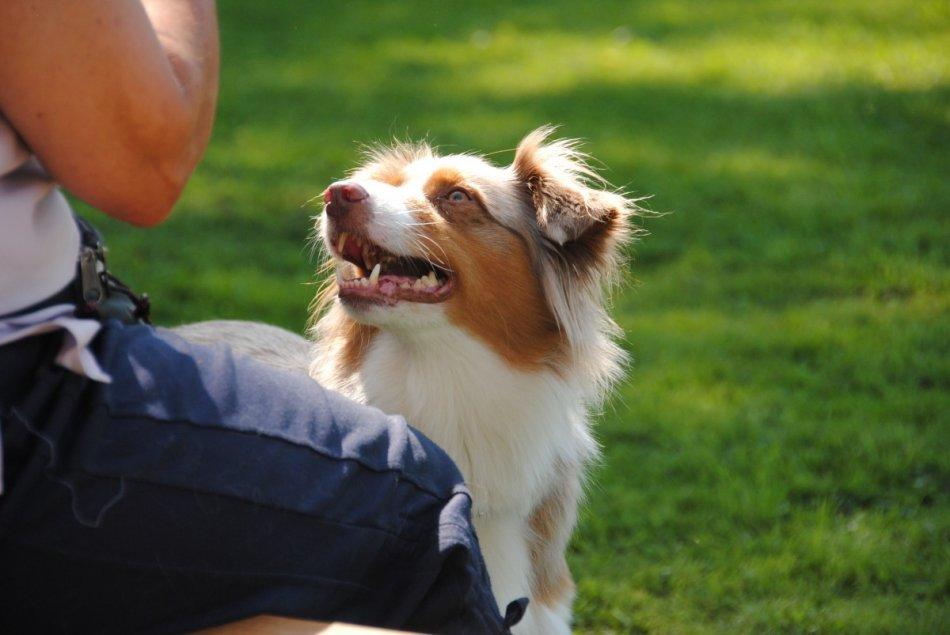 Собака смотрит на человека фото