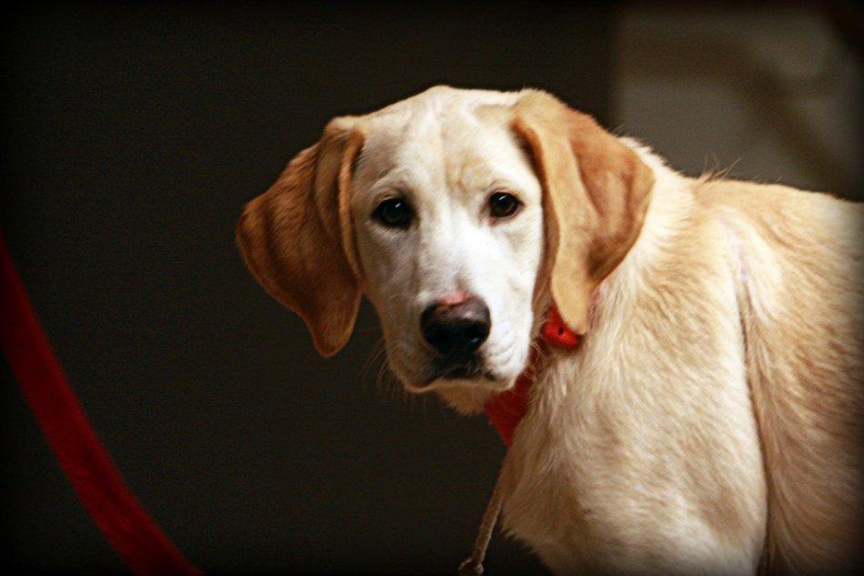 Адаптация дикой собаки фото