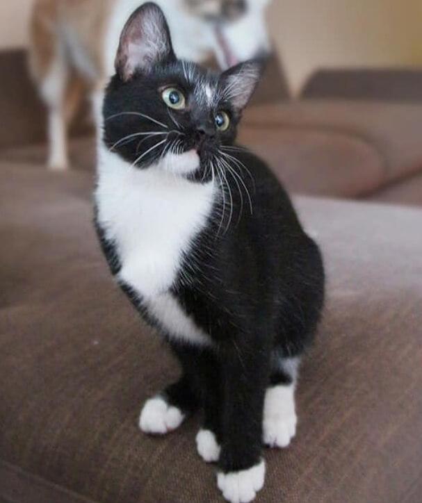 кошка, котенок, черная кошка