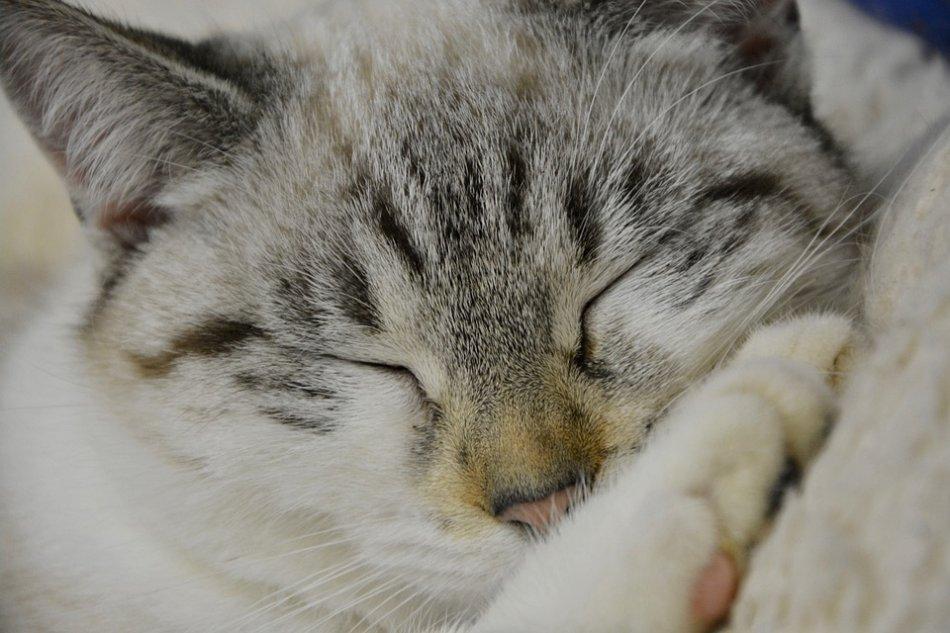 кошка спит фото крупным планом