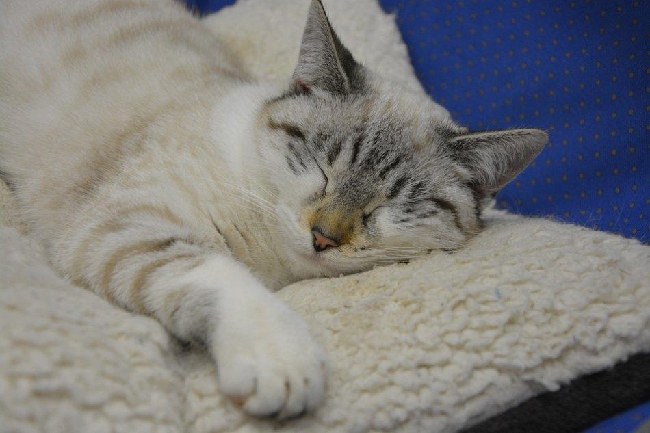 Кошка спит на матрасике фото