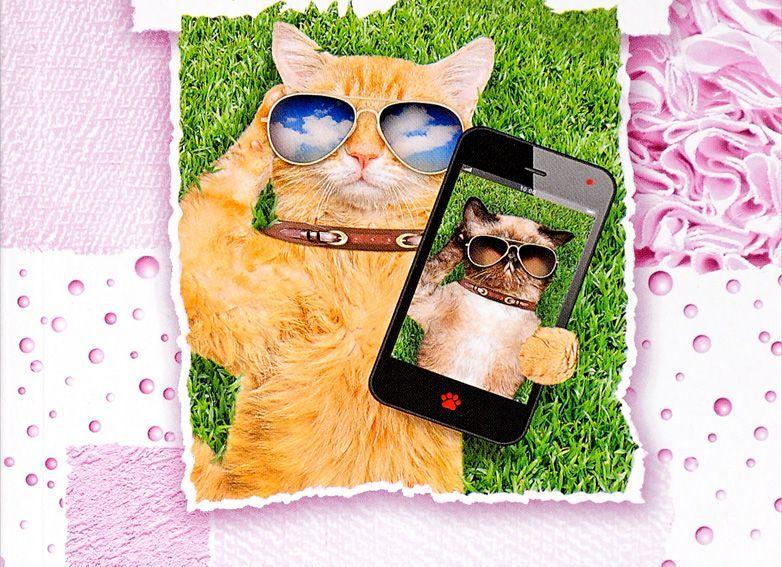 Детективы о кошках фото