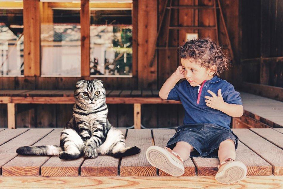 Ребенок мальчик и кошка фото