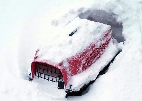 переноска, переноска с кошкой, снег, зима