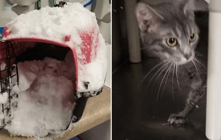 кошка, кошка в переноске, переноска, зима, снег