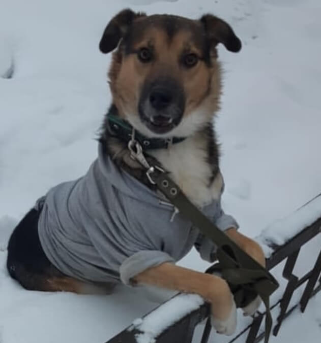 пес, собака, собака на снегу, зима, снег