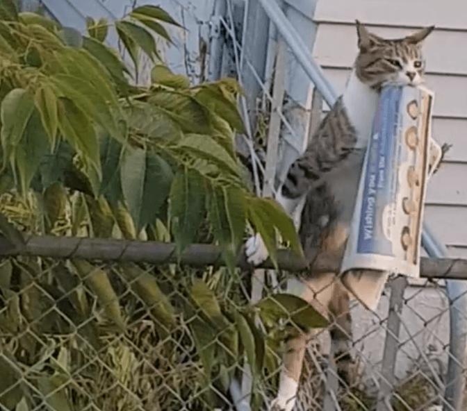 кот, забор, газета, кот на заборе, кот с газетой