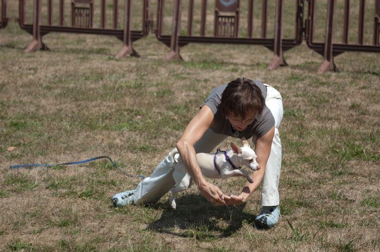 Белая собачка прыгает в кольцо из рук фото