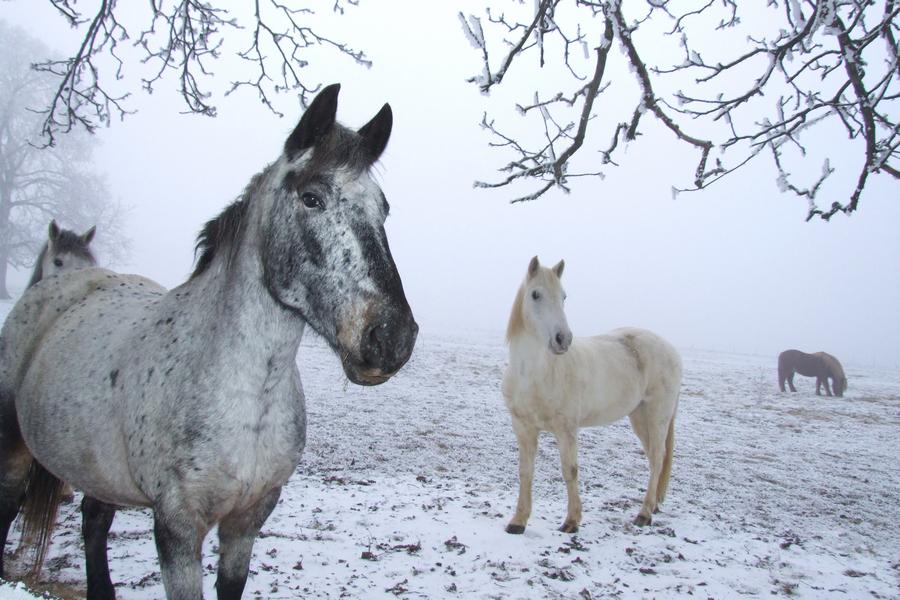 Лошади зимой фото