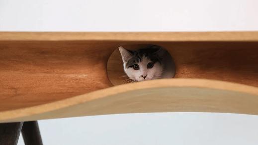 кошка, стол, кошка на столе, кот