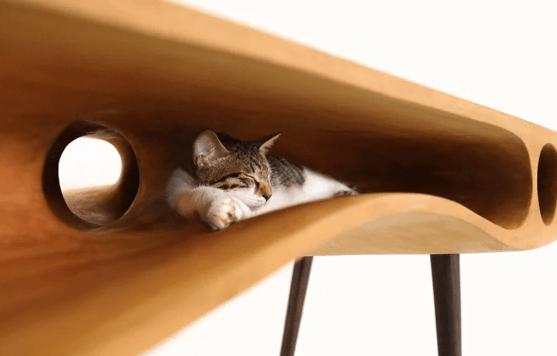 кот, стол, рабочий стол, кошка