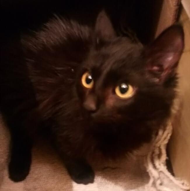 котенок, черный кот, маленький котенок, черный котенок