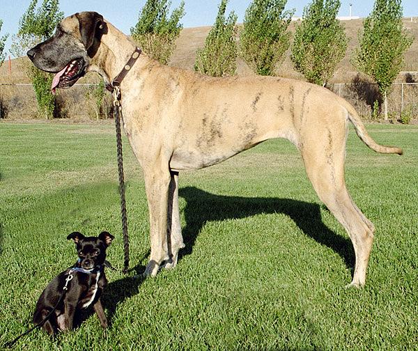 Большая и маленькая собака фото
