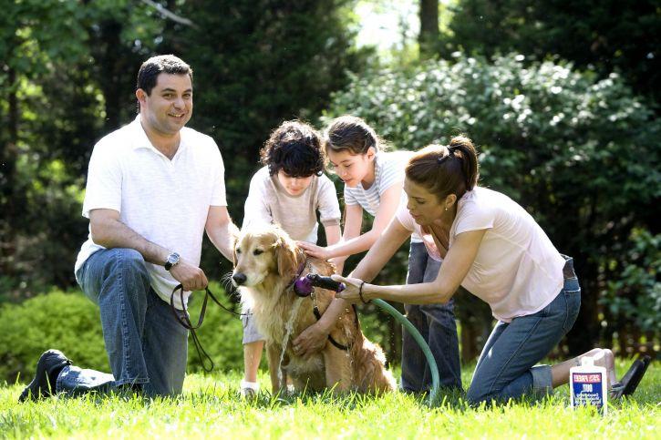 Семья с детьми моет золотистого ретривера фото