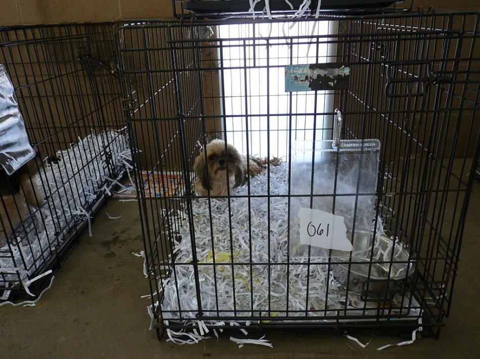 Собаки для разведения в клетках фото