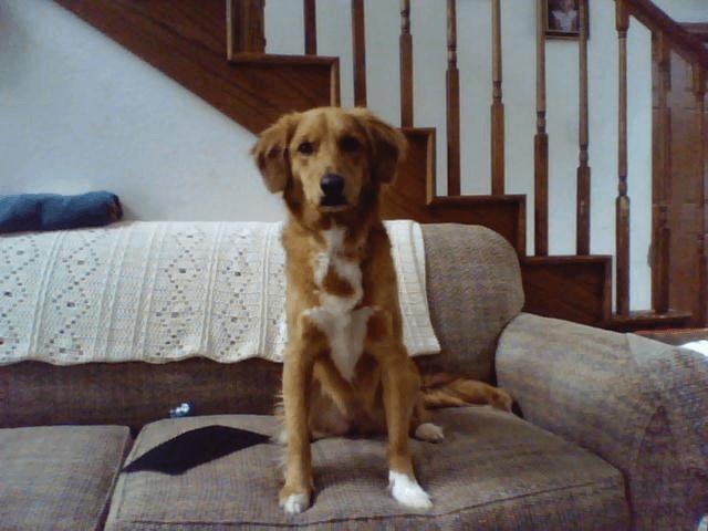 Дворняжка сидит на диване фото