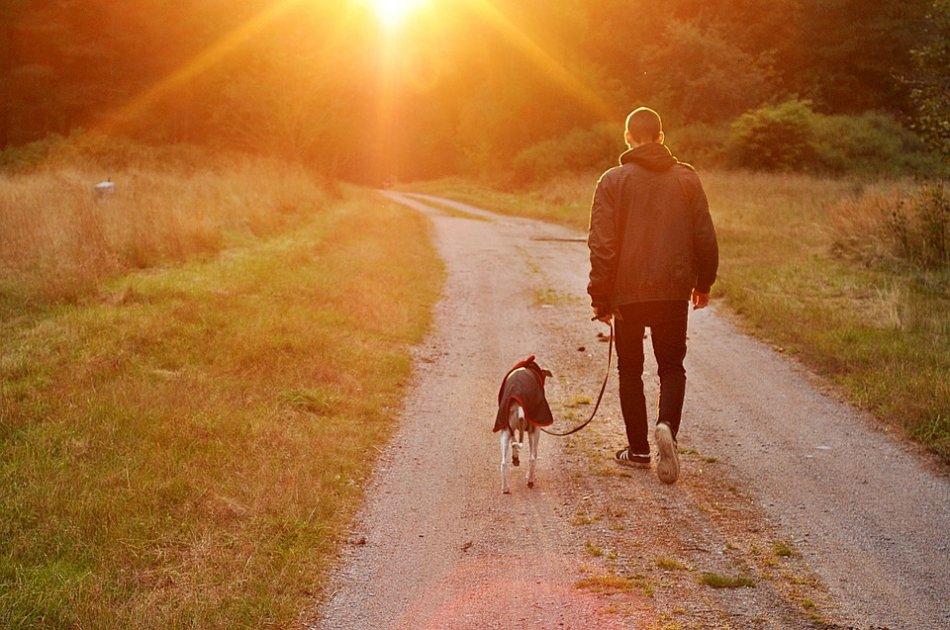 Человек и собака идут по дороге к солнцу фото