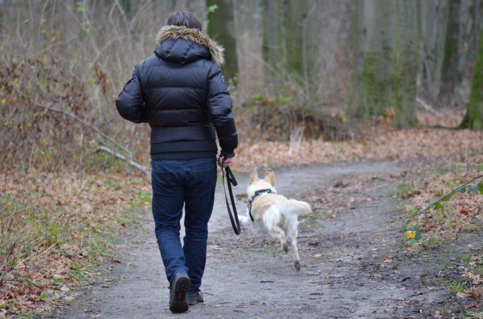 Человек гуляет с собакой в осеннем лесу фото