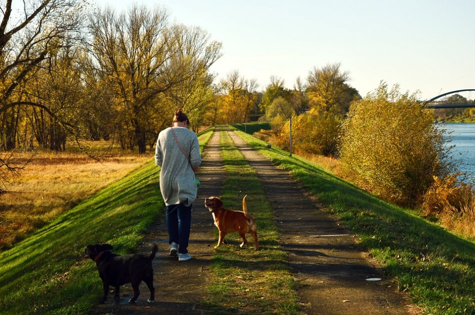 Женщина гуляет с собаками вдоль реки фото
