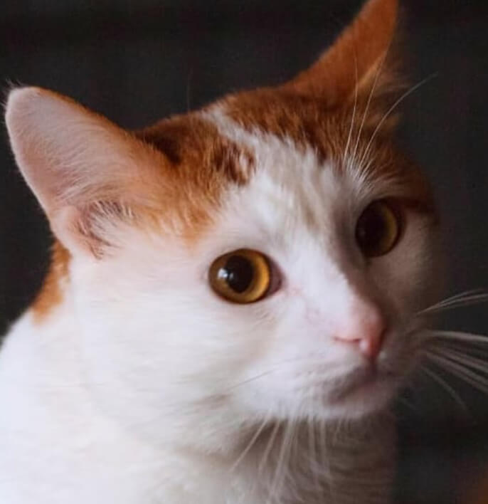 кот, рыжий кот, домашний питомец, бездомный кот