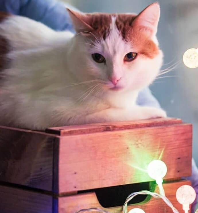кот лежит, рыжий кот, рыжая кошка, домашний питомец, коробка