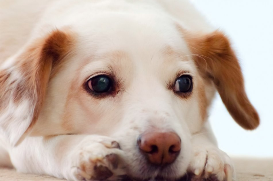 Грустная собака одна дома фото