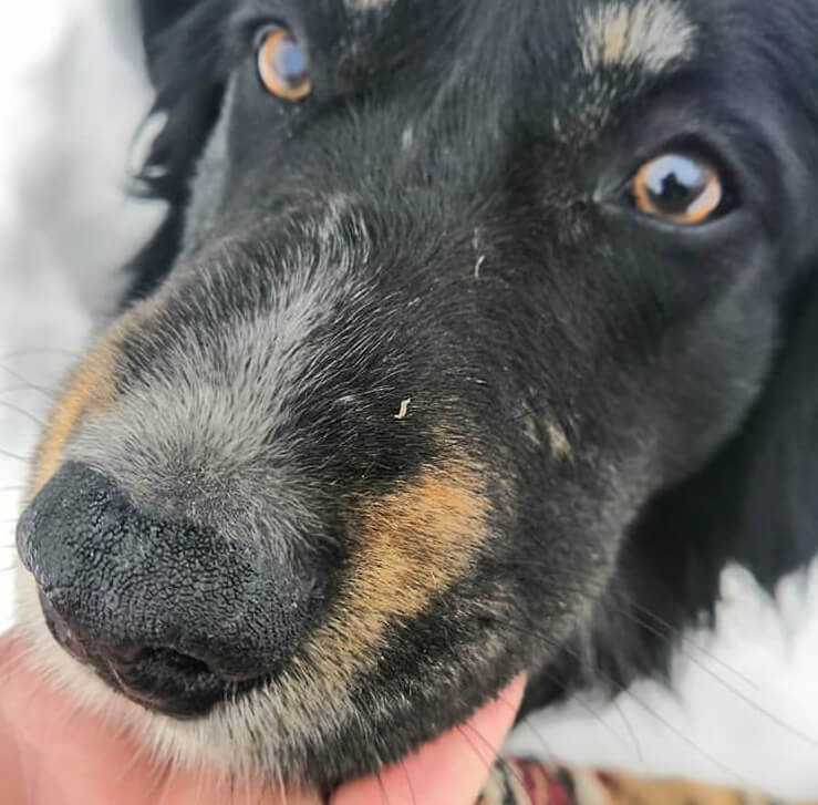 пес, зима, снег, бездомный пес, собака