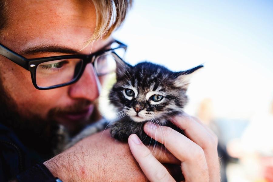 Серо-полосатый пушистый котенок на руках фото