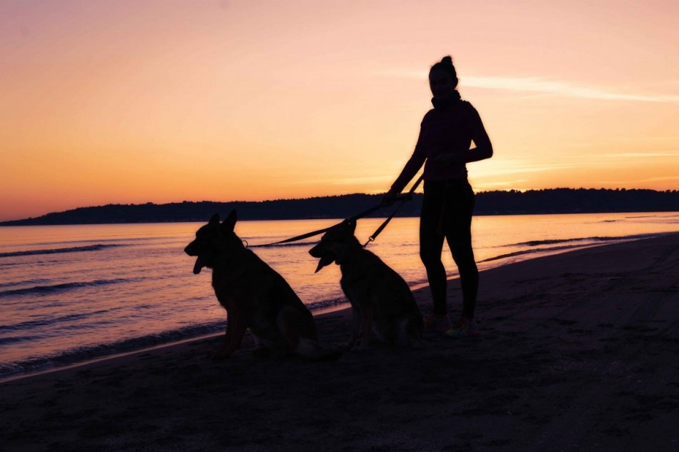 Женщина и две собаки на берегу моря на закате фото