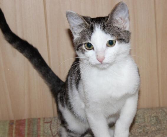 кот, кошка, хвост кота, котенок, домашний любимец