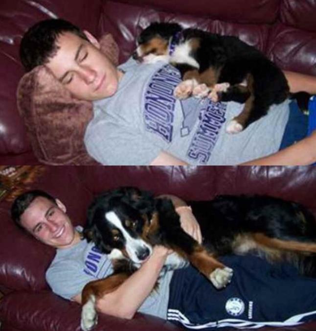 собака, пес, пес с хозяином, пес на диване, собака на диване