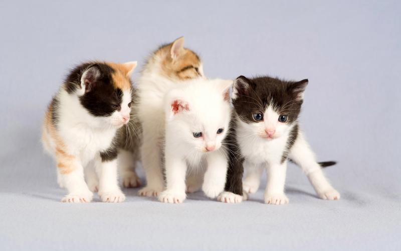 Маленькие котята разных окрасов фото