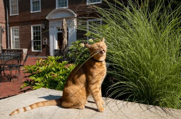 кот, рыжий кот, кошка, улица, трава, куст