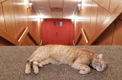 кот, домашний питомец, лестница, сон