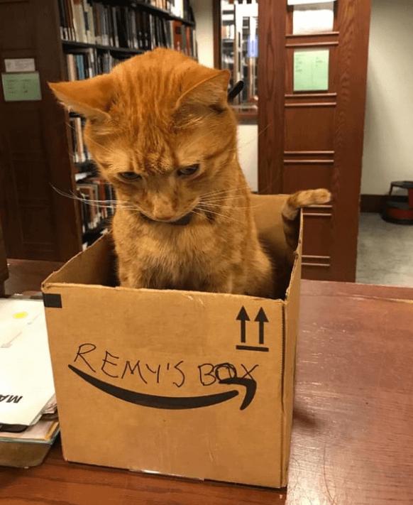 кот, рыжий кот, коробка, библиотека