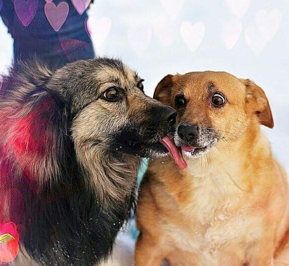 собаки, приют, любовь