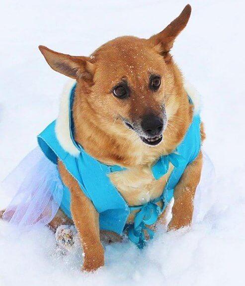 собака, зима, праздник