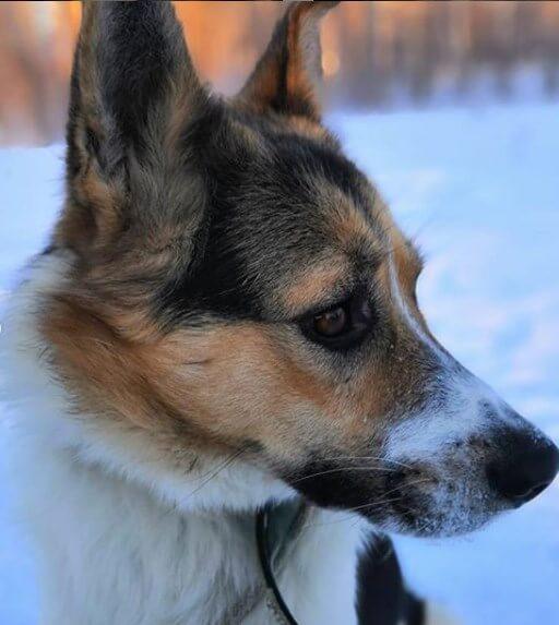 собака, дворняжка, зима
