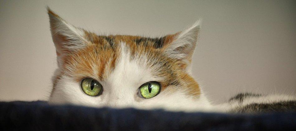 Кот прячется фото