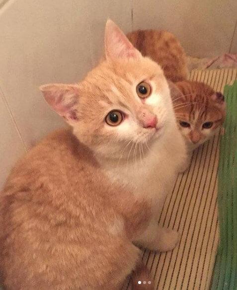 кошки, домашние животные, дом